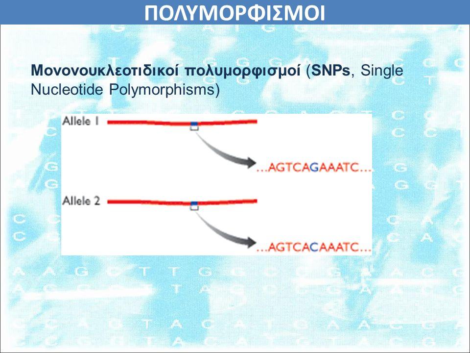 ΠΟΛΥΜΟΡΦΙΣΜΟΙ Μονονουκλεοτιδικοί πολυμορφισμοί (SNPs, Single Nucleotide Polymorphisms)