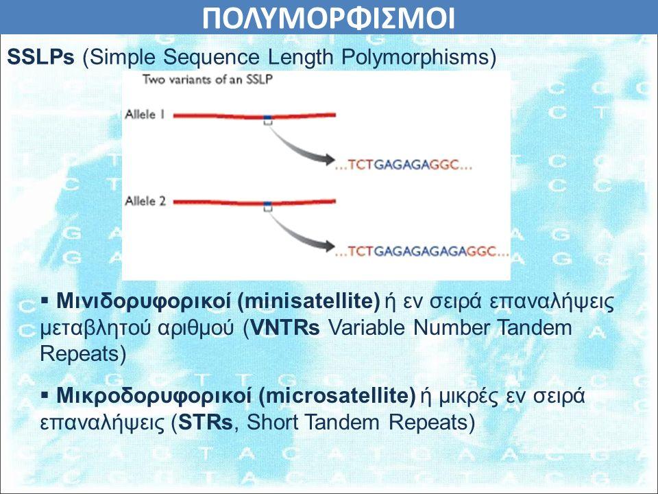 ΠΟΛΥΜΟΡΦΙΣΜΟΙ  Μινιδορυφορικοί (minisatellite) ή εν σειρά επαναλήψεις μεταβλητού αριθμού (VNTRs Variable Number Tandem Repeats)  Μικροδορυφορικοί (microsatellite) ή μικρές εν σειρά επαναλήψεις (STRs, Short Tandem Repeats) SSLPs (Simple Sequence Length Polymorphisms)