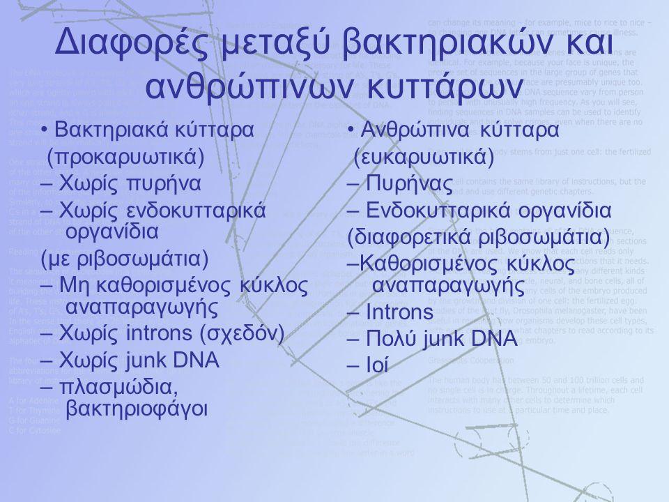 Διαφορές μεταξύ βακτηριακών και ανθρώπινων κυττάρων Βακτηριακά κύτταρα (προκαρυωτικά) – Χωρίς πυρήνα – Χωρίς ενδοκυτταρικά οργανίδια (με ριβοσωμάτια) – Μη καθορισμένος κύκλος αναπαραγωγής – Χωρίς introns (σχεδόν) – Χωρίς junk DNA – πλασμώδια, βακτηριοφάγοι Ανθρώπινα κύτταρα (ευκαρυωτικά) – Πυρήνας – Ενδοκυτταρικά οργανίδια (διαφορετικά ριβοσωμάτια) –Καθορισμένος κύκλος αναπαραγωγής – Introns – Πολύ junk DNA – Ιοί