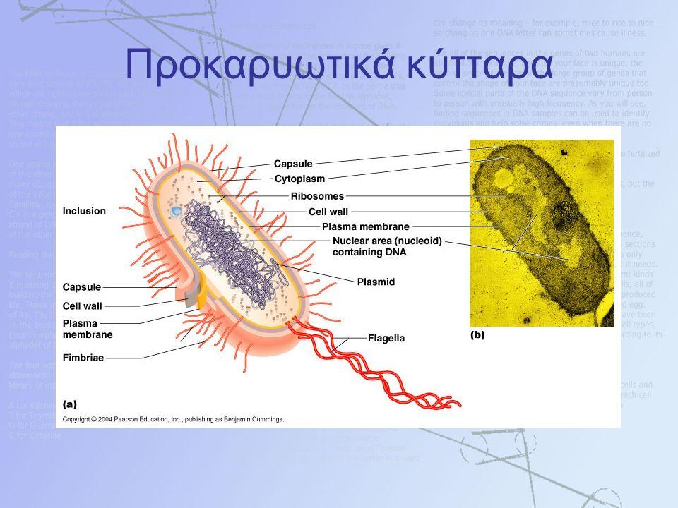 Προκαρυωτικά κύτταρα