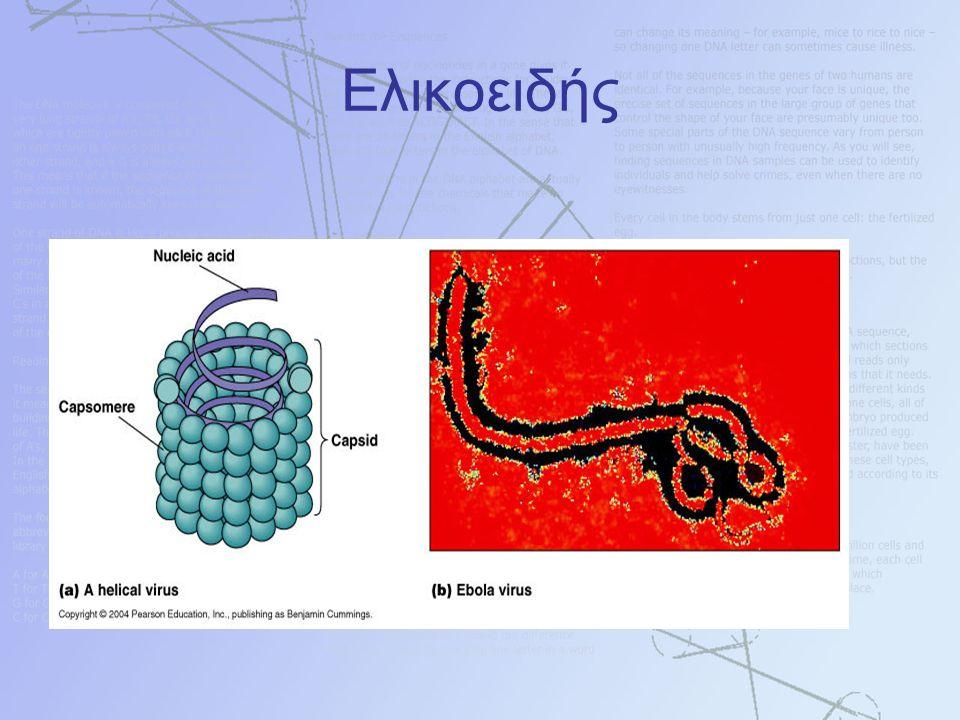 Ελικοειδής