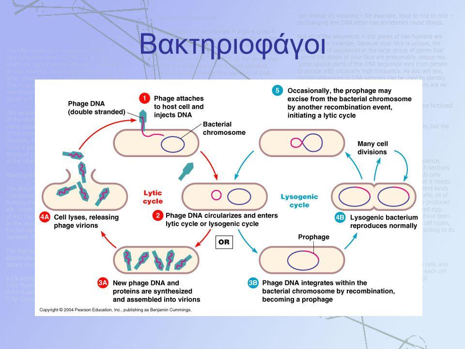 Βακτηριοφάγοι