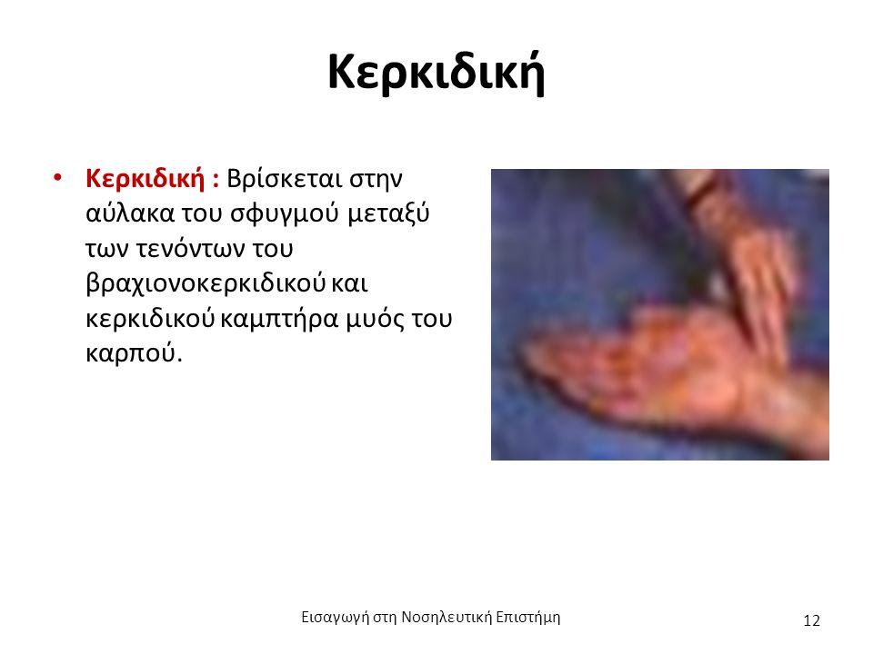 Κερκιδική Κερκιδική : Βρίσκεται στην αύλακα του σφυγμού μεταξύ των τενόντων του βραχιονοκερκιδικού και κερκιδικού καμπτήρα μυός του καρπού.