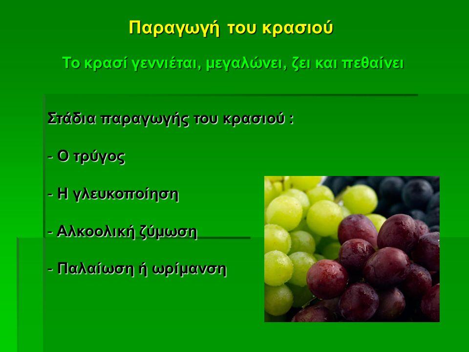 Παραγωγή του κρασιού Το κρασί γεννιέται, μεγαλώνει, ζει και πεθαίνει Στάδια παραγωγής του κρασιού : - Ο τρύγος - Η γλευκοποίηση - Αλκοολική ζύμωση - Π