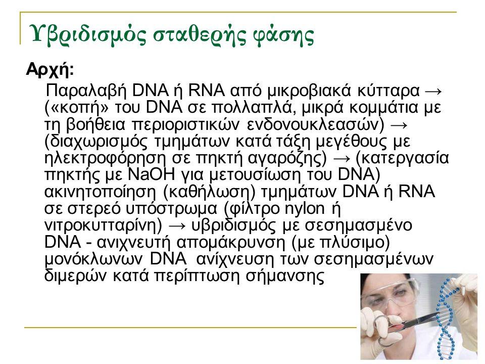 Υβριδισμός σταθερής φάσης Αρχή: Παραλαβή DNA ή RNA από μικροβιακά κύτταρα → («κοπή» του DNA σε πολλαπλά, μικρά κομμάτια με τη βοήθεια περιοριστικών εν