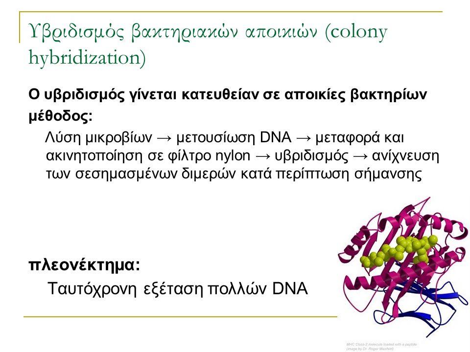 Υβριδισμός βακτηριακών αποικιών (colony hybridization) Ο υβριδισμός γίνεται κατευθείαν σε αποικίες βακτηρίων μέθοδος: Λύση μικροβίων → μετουσίωση DNA