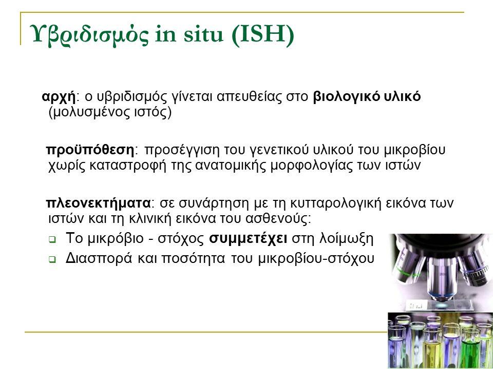 Υβριδισμός in situ (ISH) αρχή: ο υβριδισμός γίνεται απευθείας στο βιολογικό υλικό (μολυσμένος ιστός) προϋπόθεση: προσέγγιση του γενετικού υλικού του μ
