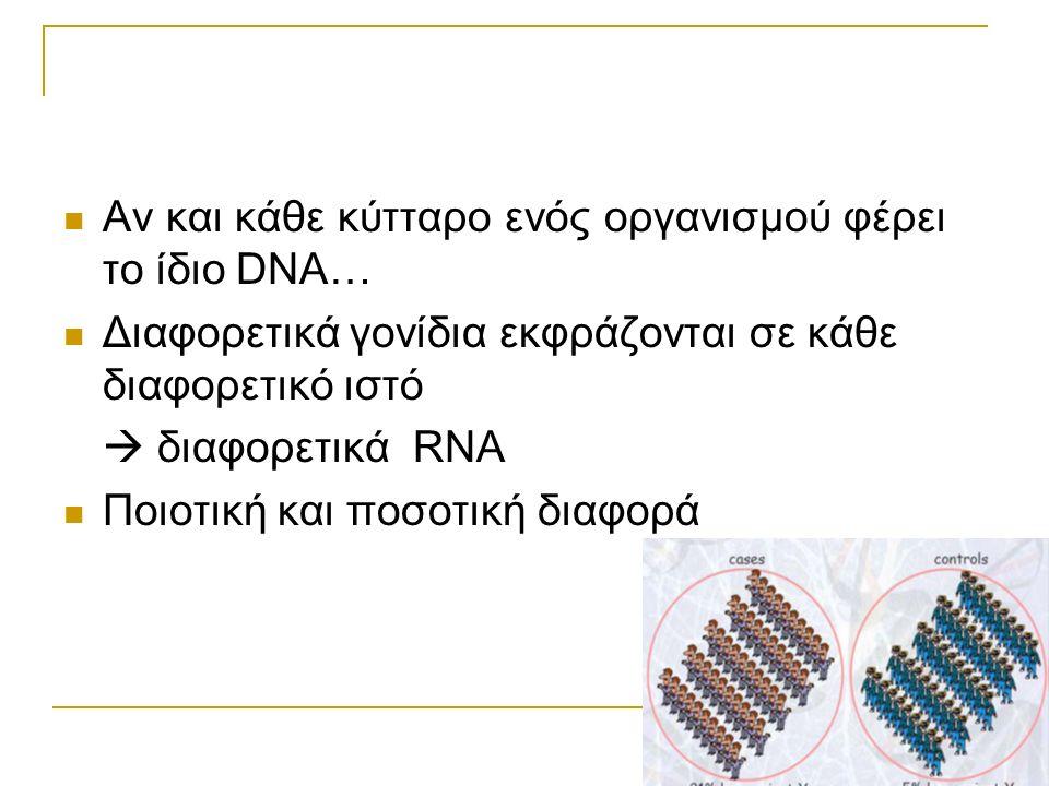 Αν και κάθε κύτταρο ενός οργανισμού φέρει το ίδιο DNA… Διαφορετικά γονίδια εκφράζονται σε κάθε διαφορετικό ιστό  διαφορετικά RNA Ποιοτική και ποσοτικ