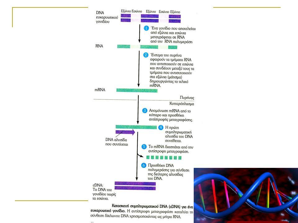 Υβριδισμός σταθερής φάσης Τρόποι σήμανσης και τελικής ανίχνευσης του DNA - ανιχνευτή (probe) : Με ραδιενεργά ισότοπα (P 32 )→ αυτοραδιογραφία ή μετρητής β ή γ ακτινοβολίας Με βιοτίνη → αβιδίνη+υπεροξειδάση → διαμινοβενζιδίνη → χρώμα (φωτομέτρηση) Με διγοξιγενίνη → Ab + αλκαλική φωσφατάση → άλας τετραζολίου, ινδοξυ-φωσφορικό → χρώμα (φωτομέτρηση) Με εστέρες της ακριδίνης → υπόστρωμα → χημειοφωταύγεια → αυτοραδιογραφία ή λουμινόμετρο