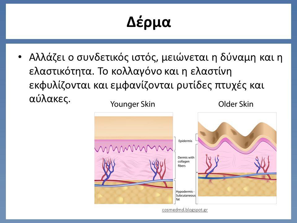 Δέρμα Αλλάζει ο συνδετικός ιστός, μειώνεται η δύναμη και η ελαστικότητα.