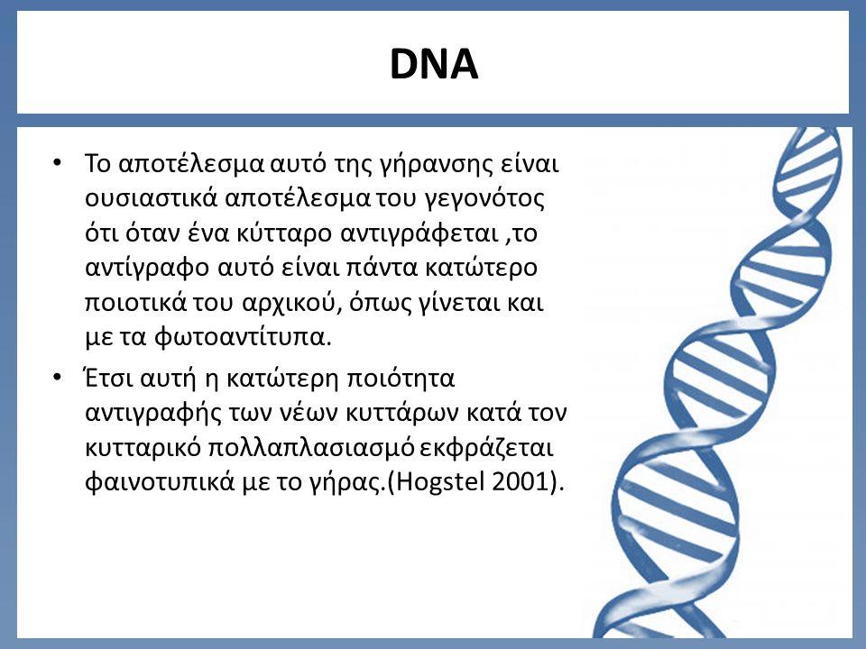 DNA Το αποτέλεσμα αυτό της γήρανσης είναι ουσιαστικά αποτέλεσμα του γεγονότος ότι όταν ένα κύτταρο αντιγράφεται,το αντίγραφο αυτό είναι πάντα κατώτερο ποιοτικά του αρχικού, όπως γίνεται και με τα φωτοαντίτυπα.
