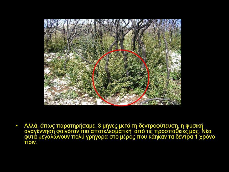 Τα αποτελέσματα της δεντροφύτευσης που κάναμε το Νοέμβριο 2008 με τη συνεργασία του δήμου της Κυπαρισσίας και της Φιγαλίας, είναι θετικά σε κάποιες περιπτώσεις εφόσον τα μικρά φυτά κατάφεραν να επιβιώσουν και να αναπτυχθούν.
