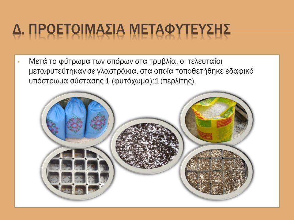 Μετά το φύτρωμα των σπόρων στα τρυβλία, οι τελευταίοι μεταφυτεύτηκαν σε γλαστράκια, στα οποία τοποθετήθηκε εδαφικό υπόστρωμα σύστασης 1 (φυτόχωμα):1 (περλίτης).