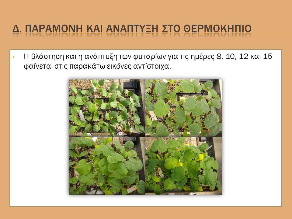 Η βλάστηση και η ανάπτυξη των φυταρίων για τις ημέρες 8, 10, 12 και 15 φαίνεται στις παρακάτω εικόνες αντίστοιχα.