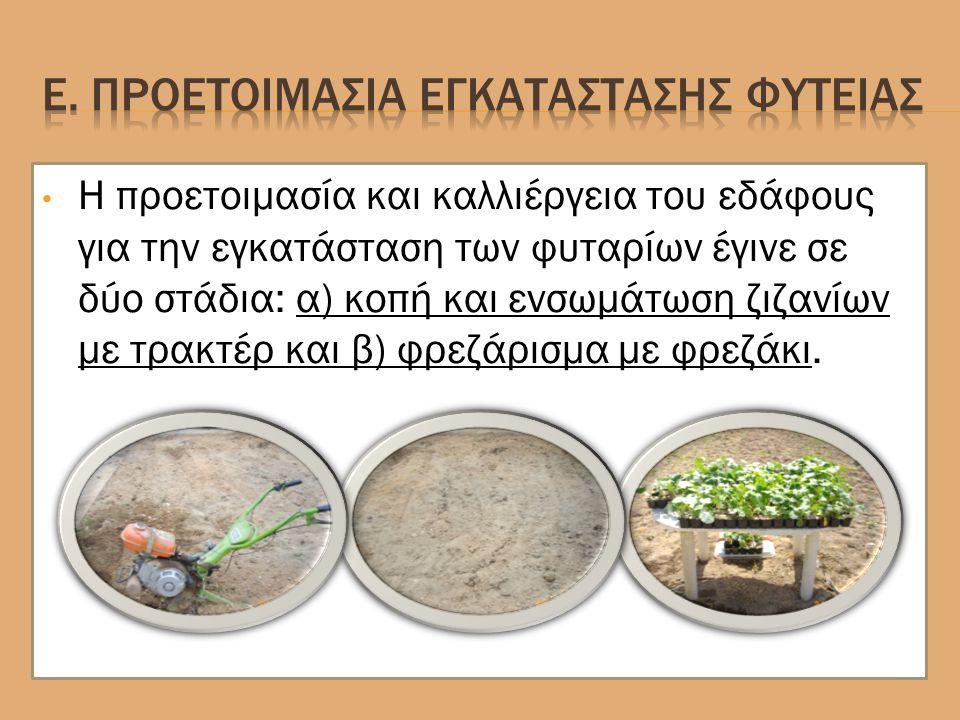 Η προετοιμασία και καλλιέργεια του εδάφους για την εγκατάσταση των φυταρίων έγινε σε δύο στάδια: α) κοπή και ενσωμάτωση ζιζανίων με τρακτέρ και β) φρεζάρισμα με φρεζάκι.