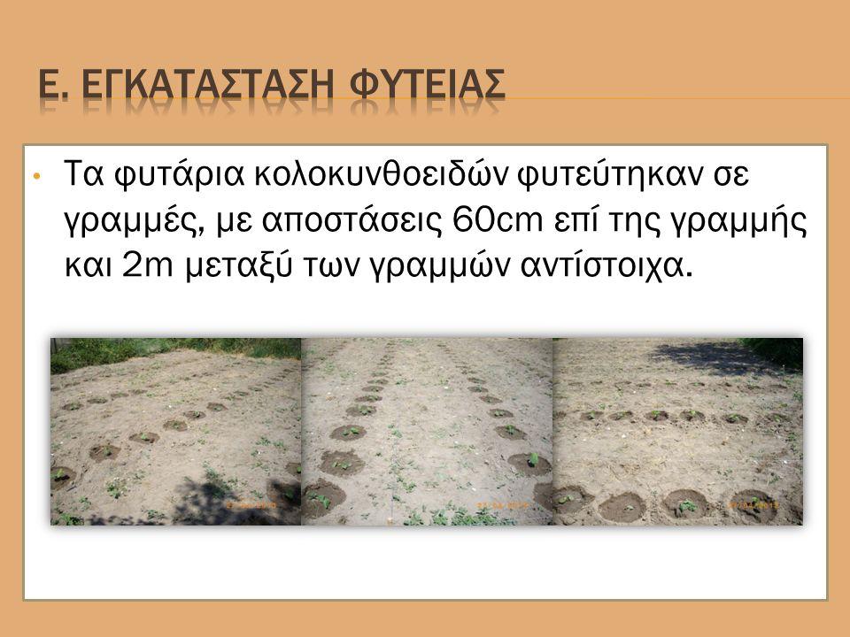 Τα φυτάρια κολοκυνθοειδών φυτεύτηκαν σε γραμμές, με αποστάσεις 60cm επί της γραμμής και 2m μεταξύ των γραμμών αντίστοιχα.