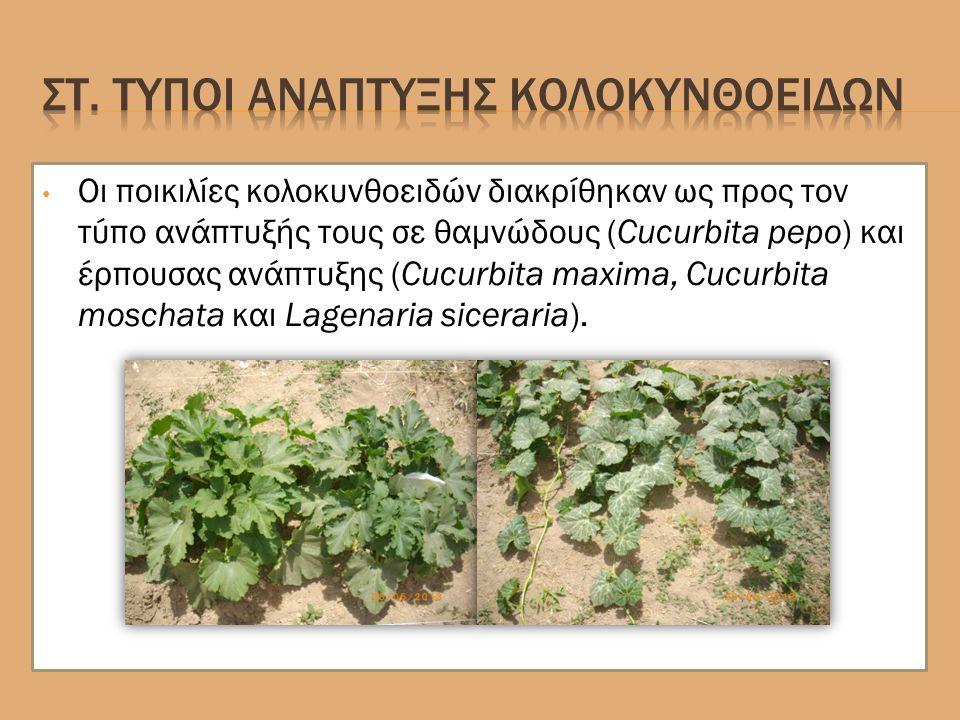 Οι ποικιλίες κολοκυνθοειδών διακρίθηκαν ως προς τον τύπο ανάπτυξής τους σε θαμνώδους (Cucurbita pepo) και έρπουσας ανάπτυξης (Cucurbita maxima, Cucurbita moschata και Lagenaria siceraria).