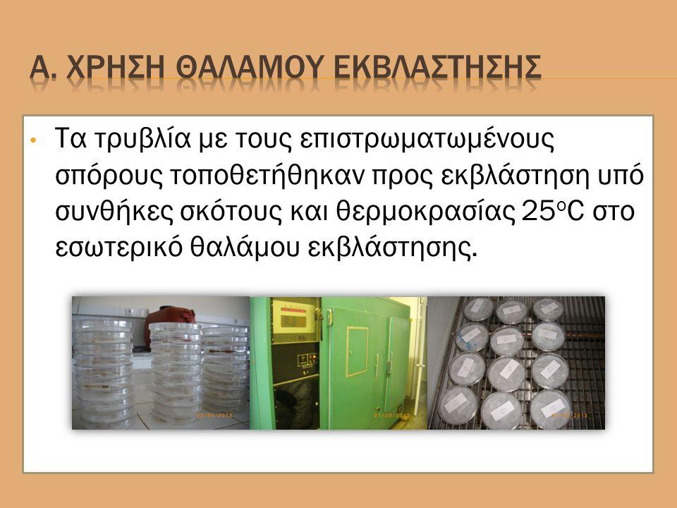 Τα τρυβλία με τους επιστρωματωμένους σπόρους τοποθετήθηκαν προς εκβλάστηση υπό συνθήκες σκότους και θερμοκρασίας 25 ο C στο εσωτερικό θαλάμου εκβλάστησης.