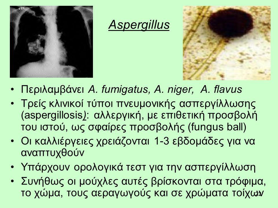 22 Aspergillus Περιλαμβάνει A. fumigatus, A. niger, A.