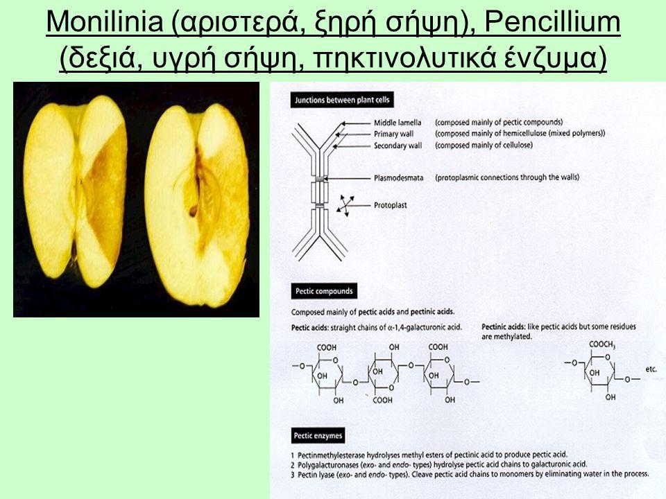 28 Monilinia (αριστερά, ξηρή σήψη), Pencillium (δεξιά, υγρή σήψη, πηκτινολυτικά ένζυμα)