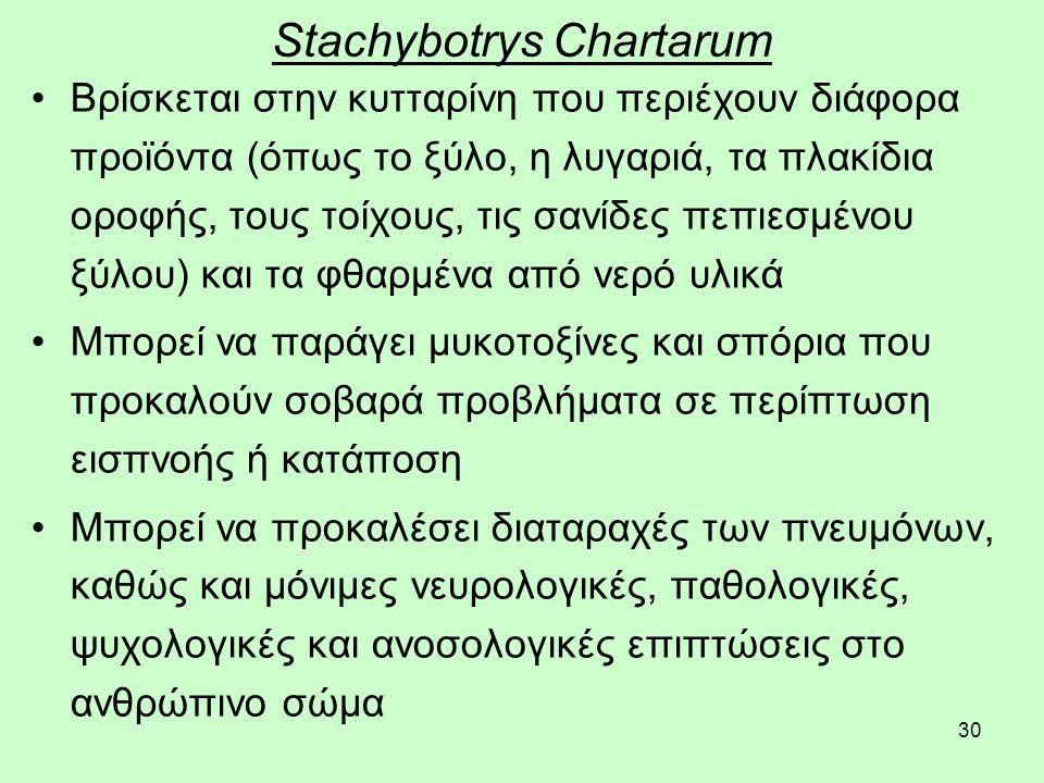 30 Stachybotrys Chartarum Βρίσκεται στην κυτταρίνη που περιέχουν διάφορα προϊόντα (όπως το ξύλο, η λυγαριά, τα πλακίδια οροφής, τους τοίχους, τις σανίδες πεπιεσμένου ξύλου) και τα φθαρμένα από νερό υλικά Μπορεί να παράγει μυκοτοξίνες και σπόρια που προκαλούν σοβαρά προβλήματα σε περίπτωση εισπνοής ή κατάποση Μπορεί να προκαλέσει διαταραχές των πνευμόνων, καθώς και μόνιμες νευρολογικές, παθολογικές, ψυχολογικές και ανοσολογικές επιπτώσεις στο ανθρώπινο σώμα