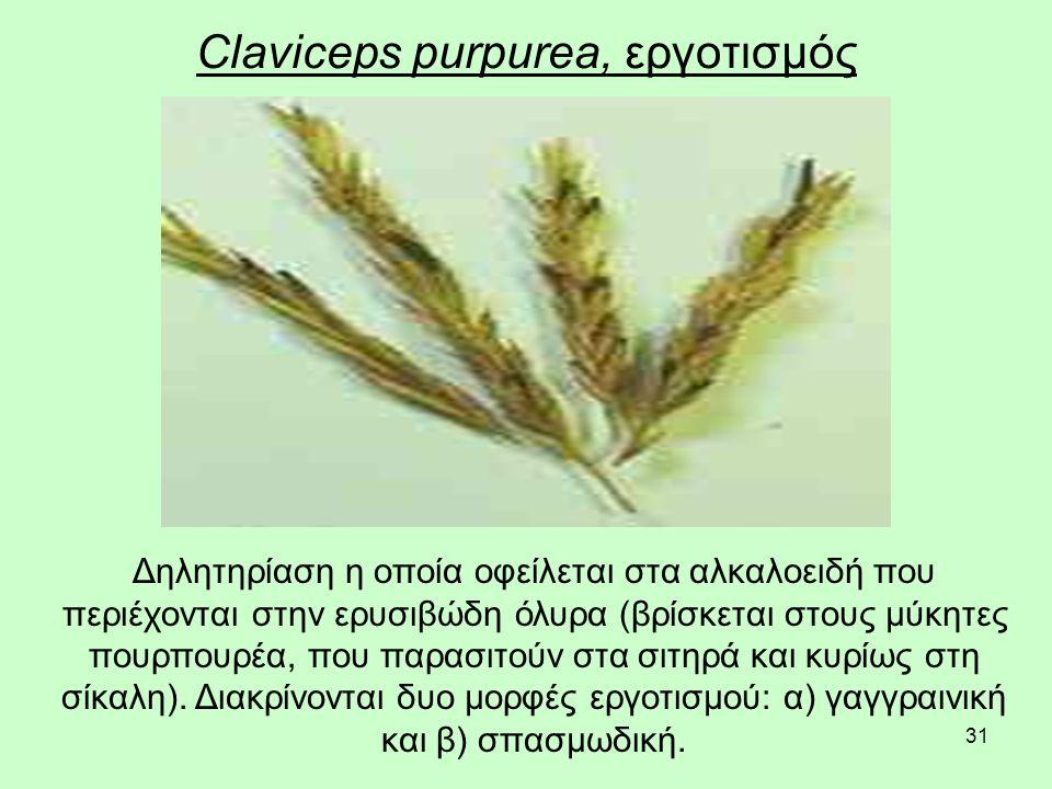 31 Claviceps purpurea, εργοτισμός Δηλητηρίαση η οποία οφείλεται στα αλκαλοειδή που περιέχονται στην ερυσιβώδη όλυρα (βρίσκεται στους μύκητες πουρπουρέα, που παρασιτούν στα σιτηρά και κυρίως στη σίκαλη).