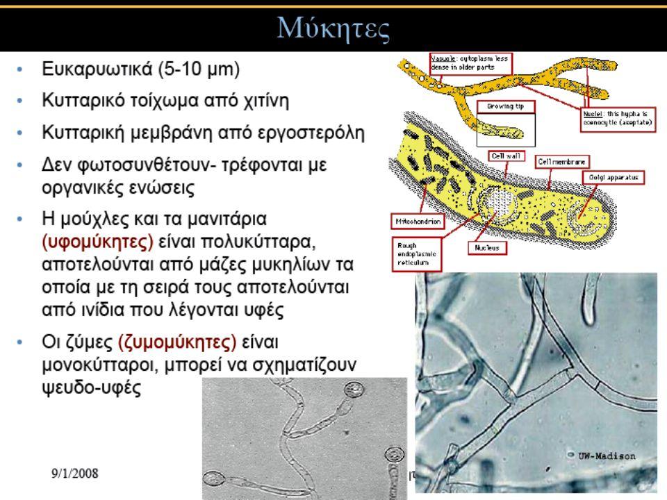 25 Cladosporium Συχνά εντοπίζεται σε περιβάλλοντα με υψηλή υγρασία, στον υαλοβάμβακα που μονώνει αεραγωγούς, στην μπογιά και στα υφάσματα Τα είδη Cladosporium προκαλούν έλκη στο δέρμα, κερατίτιδα, ονυχομύκωση, παραρρινοκολπίτιδα, οιδήματα και πνευμονικές μολύνσεις Είναι κοινά αλλεργιογόνα και ορισμένοι παθότυποι παράγουν μυκοτοξίνες