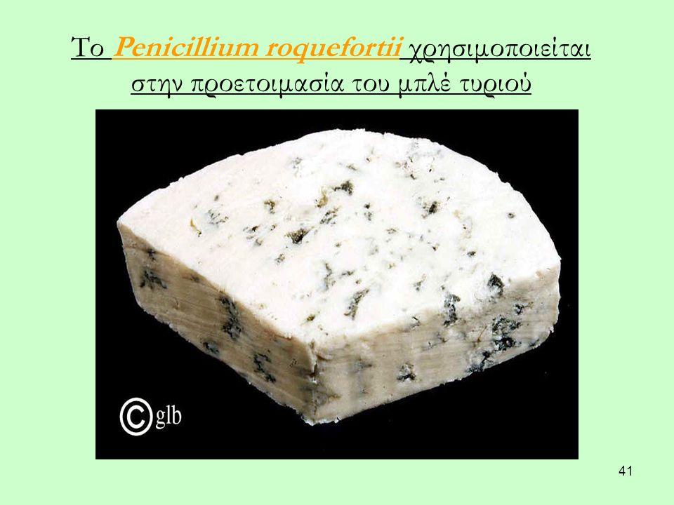 41 Το Penicillium roquefortii χρησιμοποιείται στην προετοιμασία του μπλέ τυριού