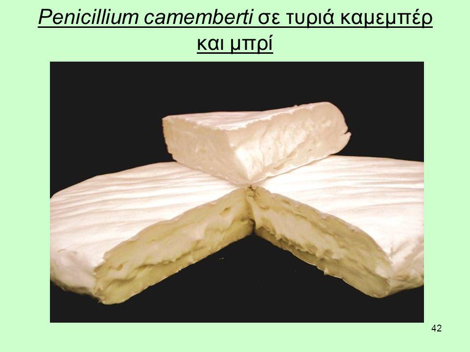 42 Penicillium camemberti σε τυριά καμεμπέρ και μπρί