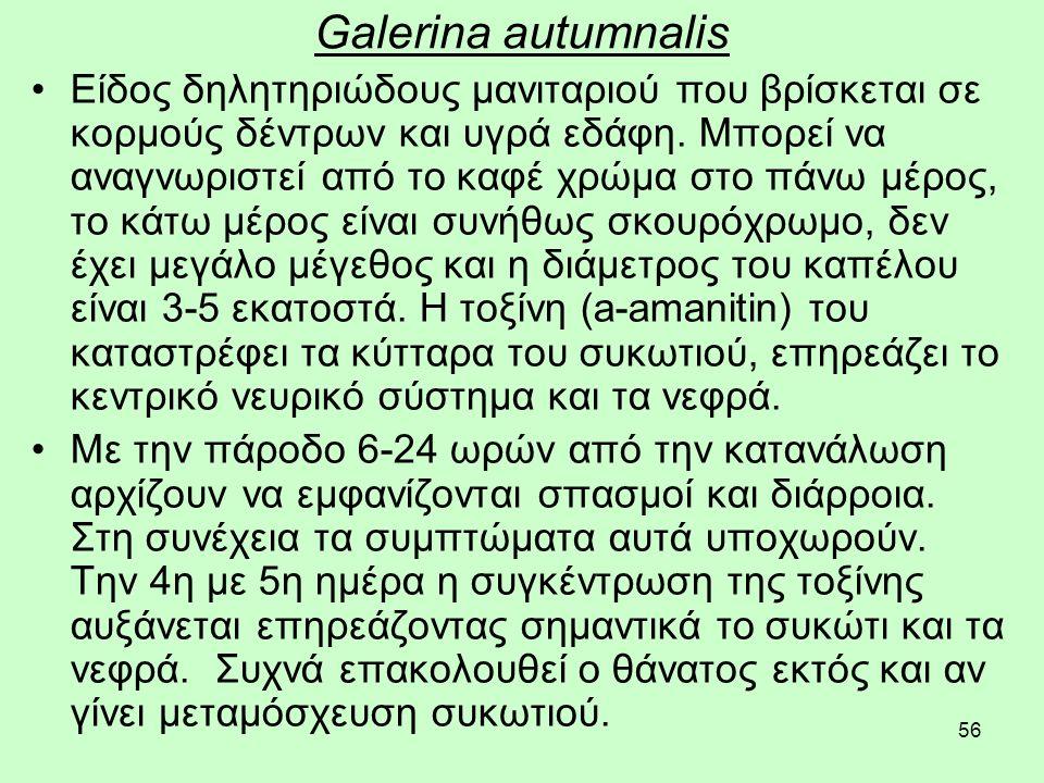 56 Galerina autumnalis Είδος δηλητηριώδους μανιταριού που βρίσκεται σε κορμούς δέντρων και υγρά εδάφη.