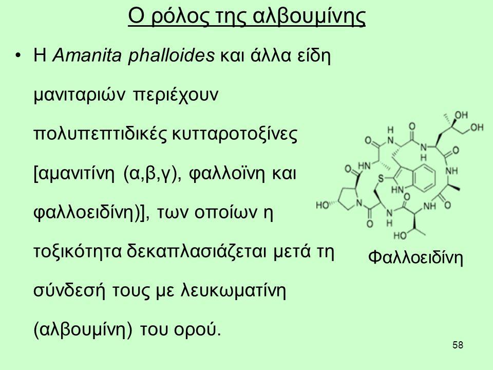 58 Ο ρόλος της αλβουμίνης Η Amanita phalloides και άλλα είδη μανιταριών περιέχουν πολυπεπτιδικές κυτταροτοξίνες [αμανιτίνη (α,β,γ), φαλλοϊνη και φαλλοειδίνη)], των οποίων η τοξικότητα δεκαπλασιάζεται μετά τη σύνδεσή τους με λευκωματίνη (αλβουμίνη) του ορού.