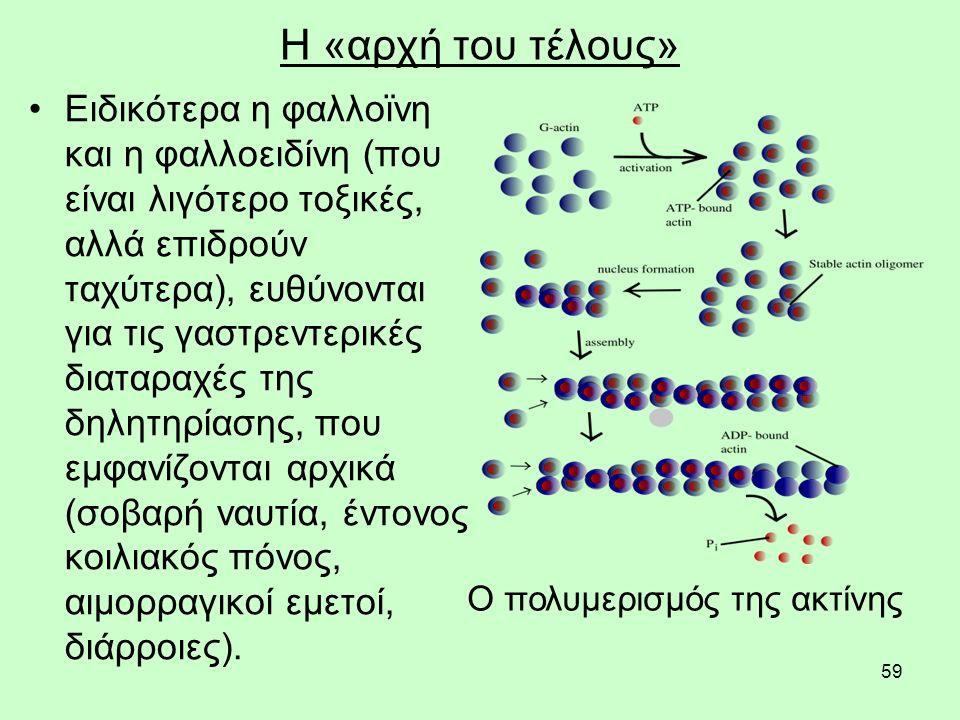 59 Η «αρχή του τέλους» Ειδικότερα η φαλλοϊνη και η φαλλοειδίνη (που είναι λιγότερο τοξικές, αλλά επιδρούν ταχύτερα), ευθύνονται για τις γαστρεντερικές διαταραχές της δηλητηρίασης, που εμφανίζονται αρχικά (σοβαρή ναυτία, έντονος κοιλιακός πόνος, αιμορραγικοί εμετοί, διάρροιες).