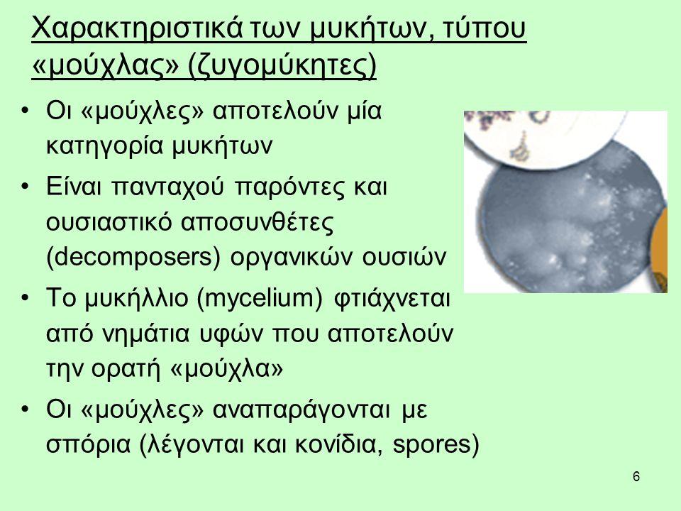 6 Χαρακτηριστικά των μυκήτων, τύπου «μούχλας» (ζυγομύκητες) Οι «μούχλες» αποτελούν μία κατηγορία μυκήτων Είναι πανταχού παρόντες και ουσιαστικό αποσυνθέτες (decomposers) οργανικών ουσιών Το μυκήλλιο (mycelium) φτιάχνεται από νημάτια υφών που αποτελούν την ορατή «μούχλα» Οι «μούχλες» αναπαράγονται με σπόρια (λέγονται και κονίδια, spores)