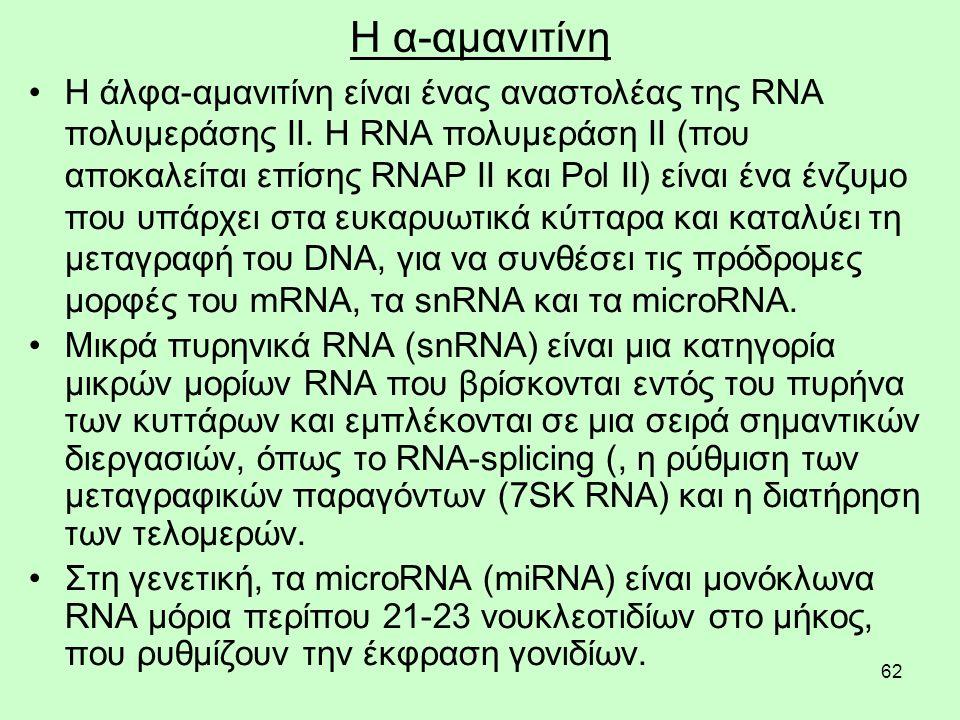 62 Η α-αμανιτίνη Η άλφα-αμανιτίνη είναι ένας αναστολέας της RNA πολυμεράσης II.
