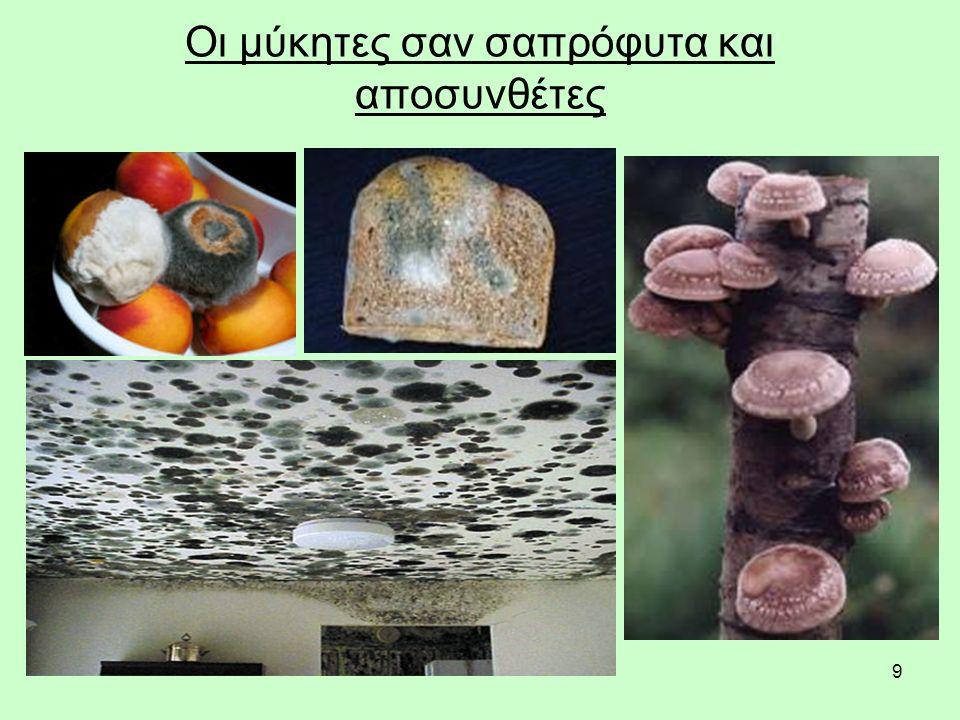 10 Ζυγομύκητες στα τρόφιμα Mucor sp. σε ροδάκινο Σποραγγεία Mucor