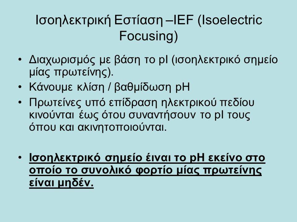 Ισοηλεκτρική Εστίαση –IEF (Isoelectric Focusing) Διαχωρισμός με βάση το pI (ισοηλεκτρικό σημείο μίας πρωτείνης).
