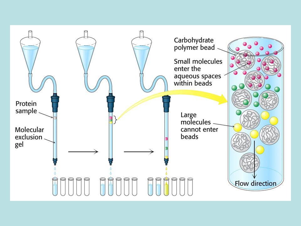Σύνθεση πεπτιδίου στερεάς φάσης Αρχίζει από το καρβοξυτελικό άκρο.