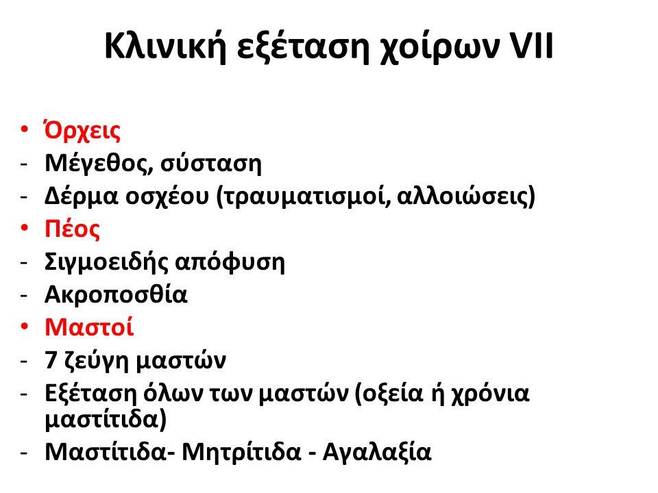 Όρχεις -Μέγεθος, σύσταση -Δέρμα οσχέου (τραυματισμοί, αλλοιώσεις) Πέος -Σιγμοειδής απόφυση -Ακροποσθία Μαστοί -7 ζεύγη μαστών -Εξέταση όλων των μαστών (οξεία ή χρόνια μαστίτιδα) -Μαστίτιδα- Μητρίτιδα - Αγαλαξία Κλινική εξέταση χοίρων VΙΙ