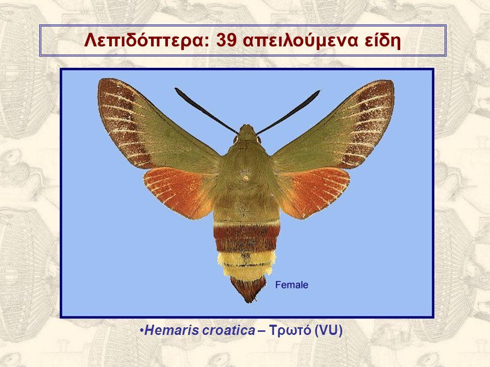 Λεπιδόπτερα: 39 απειλούμενα είδη Hemaris croatica – Τρωτό (VU)