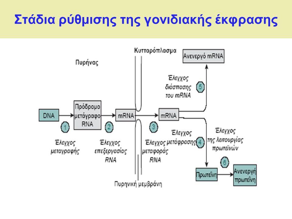 Στάδια ρύθμισης της γονιδιακής έκφρασης