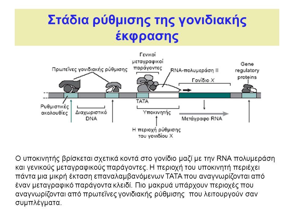Στάδια ρύθμισης της γονιδιακής έκφρασης Ο υποκινητής βρίσκεται σχετικά κοντά στο γονίδιο μαζί με την RNA πολυμεράση και γενικούς μεταγραφικούς παράγοντες.