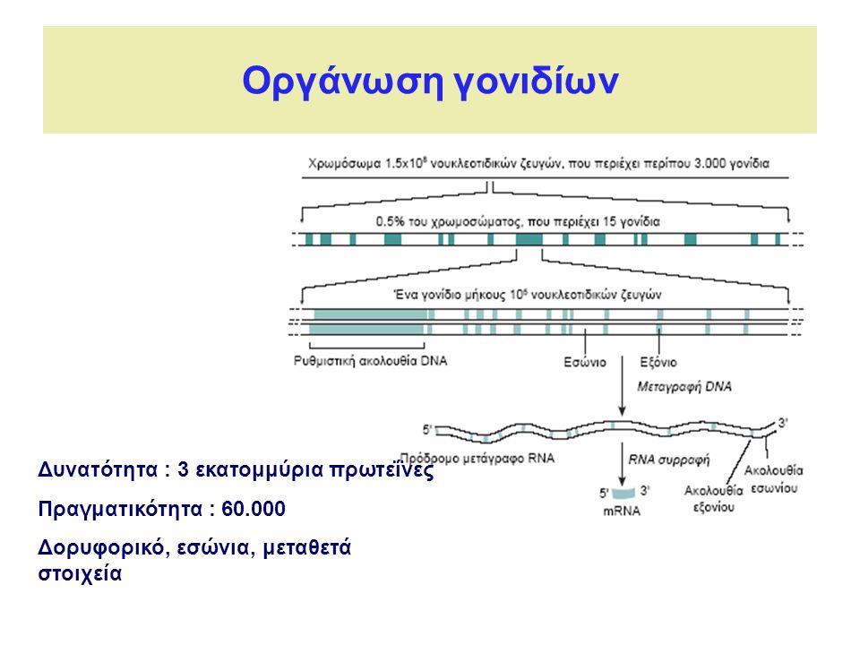 Οργάνωση γονιδίων Δυνατότητα : 3 εκατομμύρια πρωτεΐνες Πραγματικότητα : 60.000 Δορυφορικό, εσώνια, μεταθετά στοιχεία