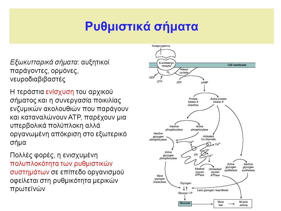 Ρυθμιστικά σήματα Εξωκυτταρικά σήματα: αυξητικοί παράγοντες, ορμόνες, νευροδιαβιβαστές Η τεράστια ενίσχυση του αρχικού σήματος και η συνεργασία ποικιλίας ενζυμικών ακολουθιών που παράγουν και καταναλώνουν ΑΤΡ, παρέχουν μια υπερβολικά πολύπλοκη αλλά οργανωμένη απόκριση στο εξωτερικό σήμα Πολλές φορές, η ενισχυμένη πολυπλοκότητα των ρυθμιστικών συστημάτων σε επίπεδο οργανισμού οφείλεται στη ρυθμικότητα μερικών πρωτεïνών