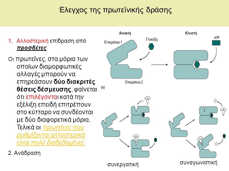 ΄ Ελεγχος της πρωτεïνικής δράσης 1.Αλλοστερική επίδραση από προσδέτες Οι πρωτεΐνες, στα μόρια των οποίων διαμορφωτικές αλλαγές μπορούν να επηρεάσουν δύο διακριτές θέσεις δέσμευσης, φαίνεται ότι επιλέγονται κατά την εξέλιξη επειδή επιτρέπουν στο κύτταρο να συνδέονται με δύο διαφορετικά μόρια.