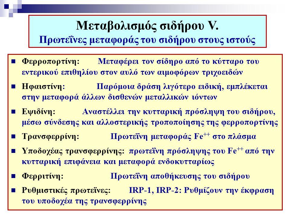 Φερροπορτίνη:Μεταφέρει τον σίδηρο από το κύτταρο του εντερικού επιθηλίου στον αυλό των αιμοφόρων τριχοειδών Ηφαιστίνη: Παρόμοια δράση λιγότερο ειδική, εμπλέκεται στην μεταφορά άλλων δισθενών μεταλλικών ιόντων Εψιδίνη: Αναστέλλει την κυτταρική πρόσληψη του σιδήρου, μέσω σύνδεσης και αλλοστερικής τροποποίησης της φερροπορτίνης Τρανσφερρίνη: Πρωτεΐνη μεταφοράς Fe ++ στο πλάσμα Υποδοχέας τρανσφερρίνης: πρωτεΐνη πρόσληψης του Fe ++ από την κυτταρική επιφάνεια και μεταφορά ενδοκυτταρίως Φερριτίνη: Πρωτεΐνη αποθήκευσης του σιδήρου Ρυθμιστικές πρωτεϊνες: IRP-1, IRP-2: Ρυθμίζουν την έκφραση του υποδοχέα της τρανσφερρίνης Μεταβολισμός σιδήρου V.