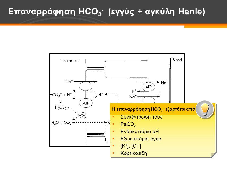 Επαναρρόφηση HCO 3 - (εγγύς + αγκύλη Ηenle)  Συγκέντρωση τους  PaCO 2  Ενδοκυττάριο pH  Εξωκυττάριο όγκο  [Κ + ], [Cl - ]  Κορτικοειδή  Συγκέντρωση τους  PaCO 2  Ενδοκυττάριο pH  Εξωκυττάριο όγκο  [Κ + ], [Cl - ]  Κορτικοειδή Η επαναρρόφηση HCO 3 - εξαρτάται από