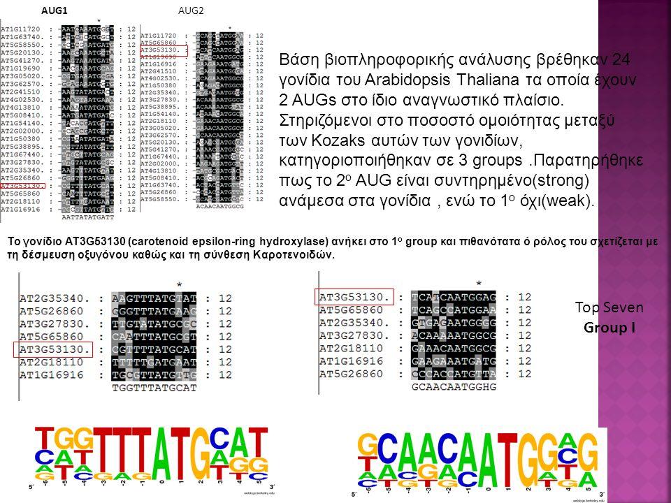 Top Seven Group I AUG1AUG2 Βάση βιοπληροφορικής ανάλυσης βρέθηκαν 24 γονίδια του Arabidopsis Thaliana τα οποία έχουν 2 AUGs στο ίδιο αναγνωστικό πλαίσιο.