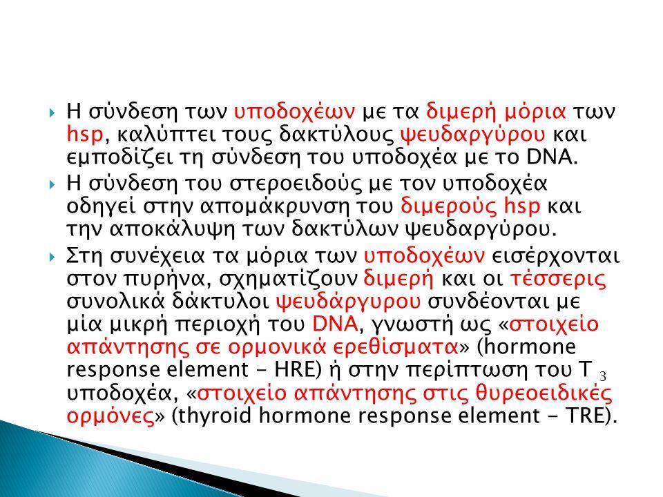  Η σύνδεση των υποδοχέων με τα διμερή μόρια των hsp, καλύπτει τους δακτύλους ψευδαργύρου και εμποδίζει τη σύνδεση του υποδοχέα με το DNA.