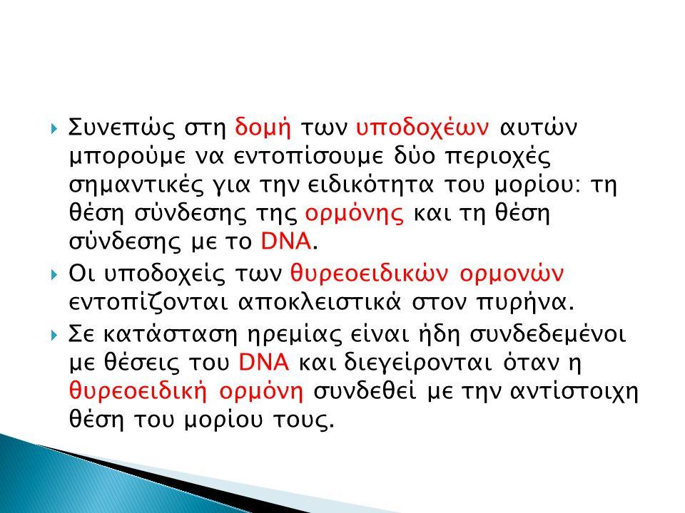  Συνεπώς στη δομή των υποδοχέων αυτών μπορούμε να εντοπίσουμε δύο περιοχές σημαντικές για την ειδικότητα του μορίου: τη θέση σύνδεσης της ορμόνης και τη θέση σύνδεσης με το DNA.