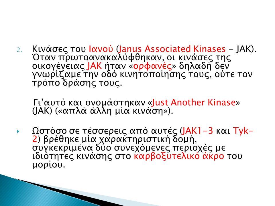 2. Κινάσες του Ιανού (Janus Associated Kinases - JAK).